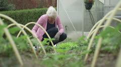 Woman gardening Stock Footage