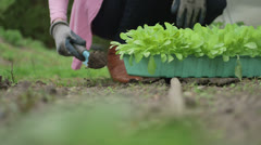 Woman digging garden Stock Footage