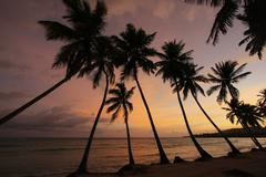 silhouette of palm trees at sunrise, las galeras beach - stock photo