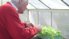 Mature Man planting plants in greenhouse - stock footage