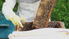 Bees in apiary. Beekeeper shaking bees into the hive. Stock Footage