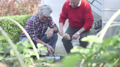 Senior, mature men working in garden - stock footage