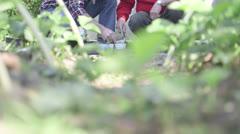 Senior, mature men working in garden - stock footage
