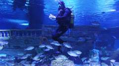 Diver in oceanarium feeding fish Stock Footage