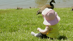Baby infant girl watching Canadian geese Stock Footage