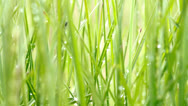 Waterdrops on grass Stock Footage