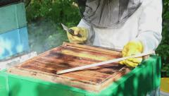 Bees in apiary. Beekeeper opening hive and checking frame. Stock Footage