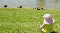 Baby infant girl watching baby geese 3 Stock Footage