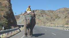 India Rajasthan Ranakpur elephant approaches on highway  Stock Footage