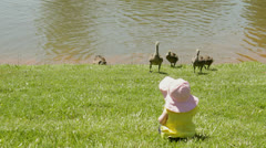Baby infant girl watching baby geese Stock Footage