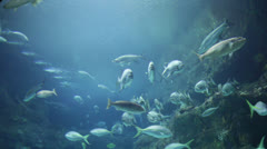 Aquarium sealife and shark - stock footage