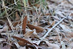 Frost on Fallen Leaves - stock photo