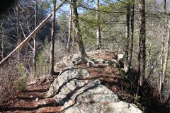 Forest Ridge -- Wintertime - stock photo