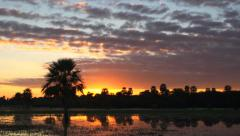 Sunrise with palms Stock Footage
