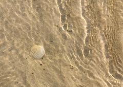 Shellfish underwater Stock Photos