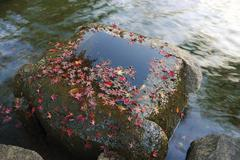 Autumnal zen Stock Photos