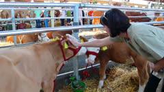 Calves Stock Footage