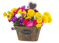 Bouquet of  aster and mum flowers Stock Photos