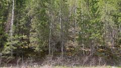 The slope is covered with wild forest. Russia, the Ural Mountains Stock Footage