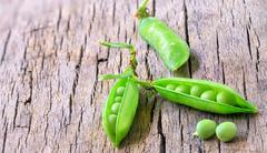 fresh beans broad on wood - stock photo