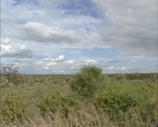 African Savanna in Krugerpark, South Africa - vehicle shot Stock Footage