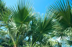 Kauneus palmujen Antalyassa Kuvituskuvat