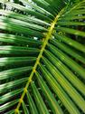 Stock Photo of palm leaf