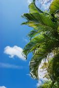 Stock Photo of palm in the sky