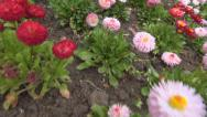 Stock Video Footage of POV Walking, Passing, Stepping in Garden, Meadow, Spring Flower Field, Footsteps