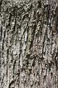 Stock Photo of Texture: Tree Bark 2