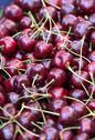 Stock Photo of fresh cherries