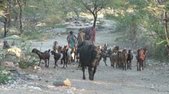 Fort Seeng Sagar buffalo and goats Stock Footage