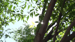 POV Looking up through the trees - stock footage