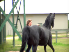 Black Stallion Rearing 2 with CC Stock Footage