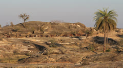 India Rajasthan Deogarh Fort Seengh Sagar herd of goats and palm  Stock Footage