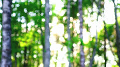 Stock Video Footage of Blurred birch forest