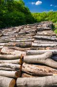 Natural resource wood Stock Photos