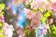 Stock Photo of blossom tree closeup