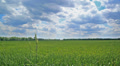 Field with  green grass and  sky in clouds. Landscape Footage