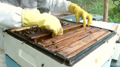 Bees in open hive. Beekeeper inserting new, empty combs in frame. Stock Footage