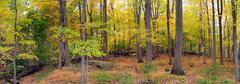 Bear Mountain metsä panoraama Kuvituskuvat