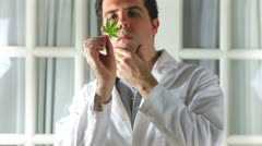 Medical marijuana canibis doctor examine  Stock Footage