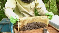 Bees in apiary. Beekeeper is shaking bees from a frame into the hive. Stock Footage
