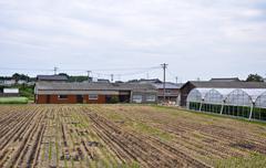 asparagus farming at isahaya, japan - stock photo
