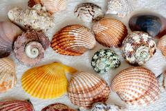 Image of seashells Stock Photos