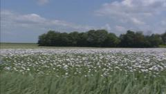 Rural landscape + pan papaver field Stock Footage