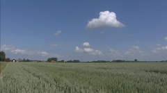 Crane + hold  Common wheat field (triticum aestivum) Stock Footage