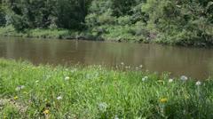 spring landscape - stock footage