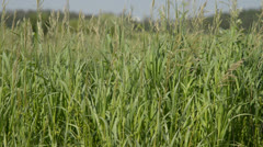 grass in the wind - stock footage