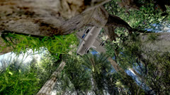 Crashed plane in the trees Stock Footage
